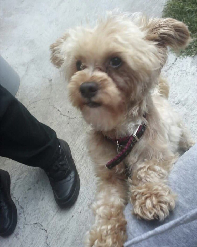 Can you guys RT this my sisters dog is missing near the LA area here in Cali https://t.co/LhL7bzfvFh