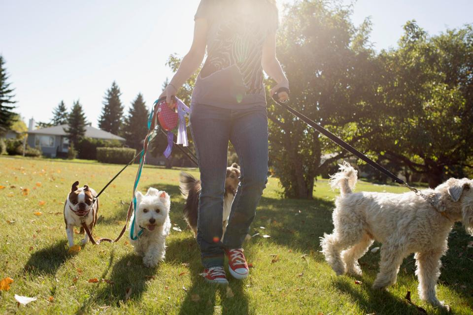 Dog walkers could be hit with £1,000 fines if they leave home without poo bags to pick up after pets