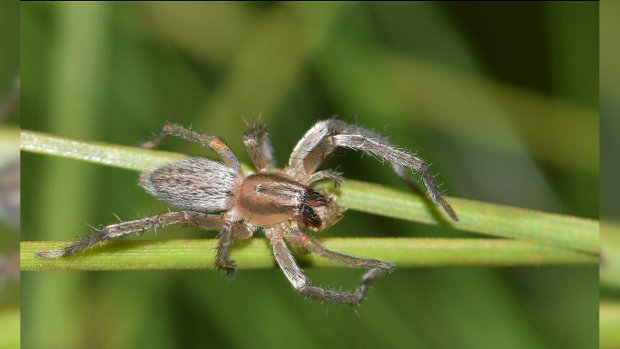 The most dangerous spiders found in Canada and what you need to know