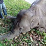 Elephant dies after being rammed by tour bus