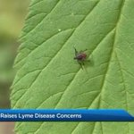 Toronto Public Health reports spike in Lyme disease cases connected to Rouge Valley