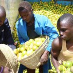 Kenya and Tanzania trade war that cost Kenyan firms Sh7.5 billion