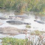 The amazing wildlife of Katavi National Park