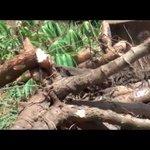Teso Farmers Demand for a Cassava Plant