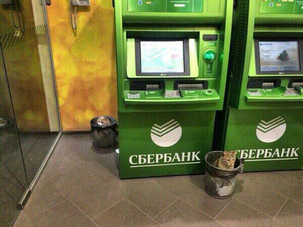 партнеры Сбербанк кэшбэк
