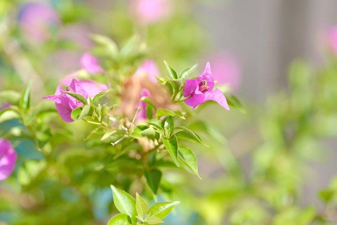 2 pic. #Tea & #nature ❤️✌️ #easy #perfect #morning https://t.co/pcw9utkj9H