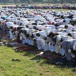 Eid al-Adha: Friday declared a public holiday