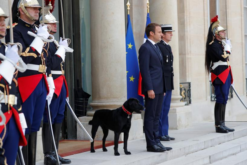 France's Macron finds Nemo, his new canine companion