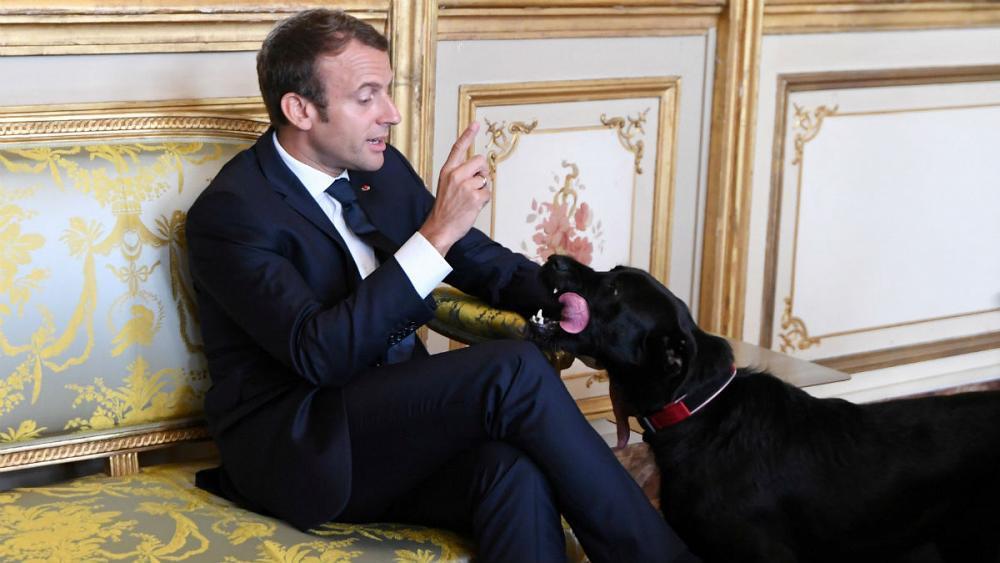 Meet France's new 'first dog' Nemo