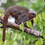 Nearly 400 new species discovered in Amazon