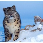United States congratulates Kyrgyzstan on hosting  successful International Snow Leopard and Ecosystem Forum