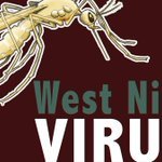 First SC West Nile Virus death reported in Anderson Co. - | WBTV Charlotte