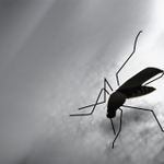 Confirmed West Nile Virus cases in Alabama increase to 14