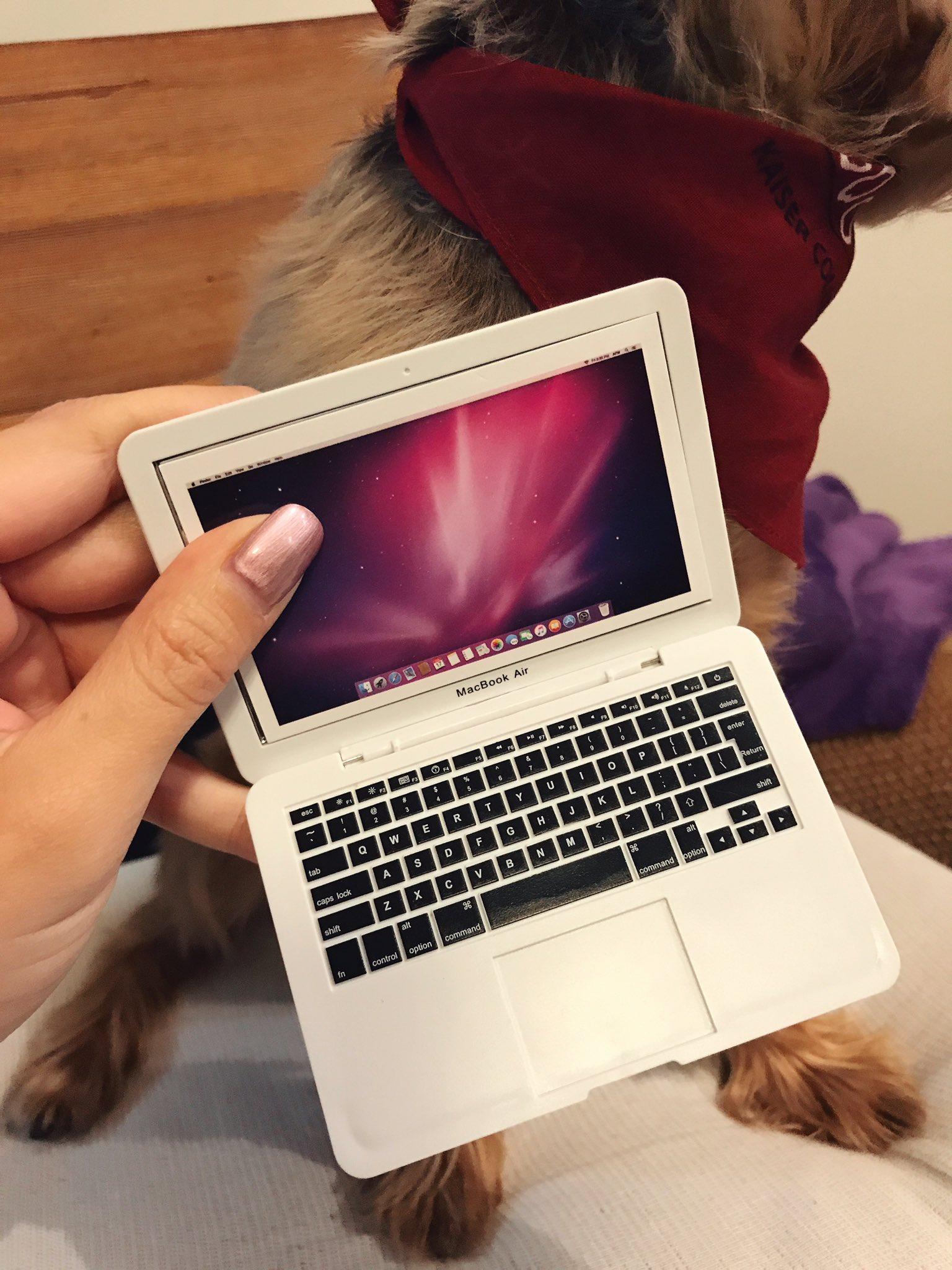 I bought a mini toy laptop for my dog. So he can at least look like he's helping support this family. https://t.co/WbWcZKQD4A