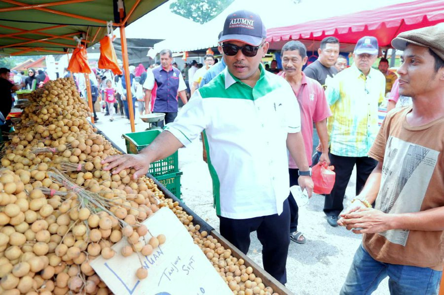 Melaka studies use of fruit trees for street landscaping