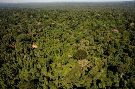 Experts concerned by Brazil environment policy under Temer