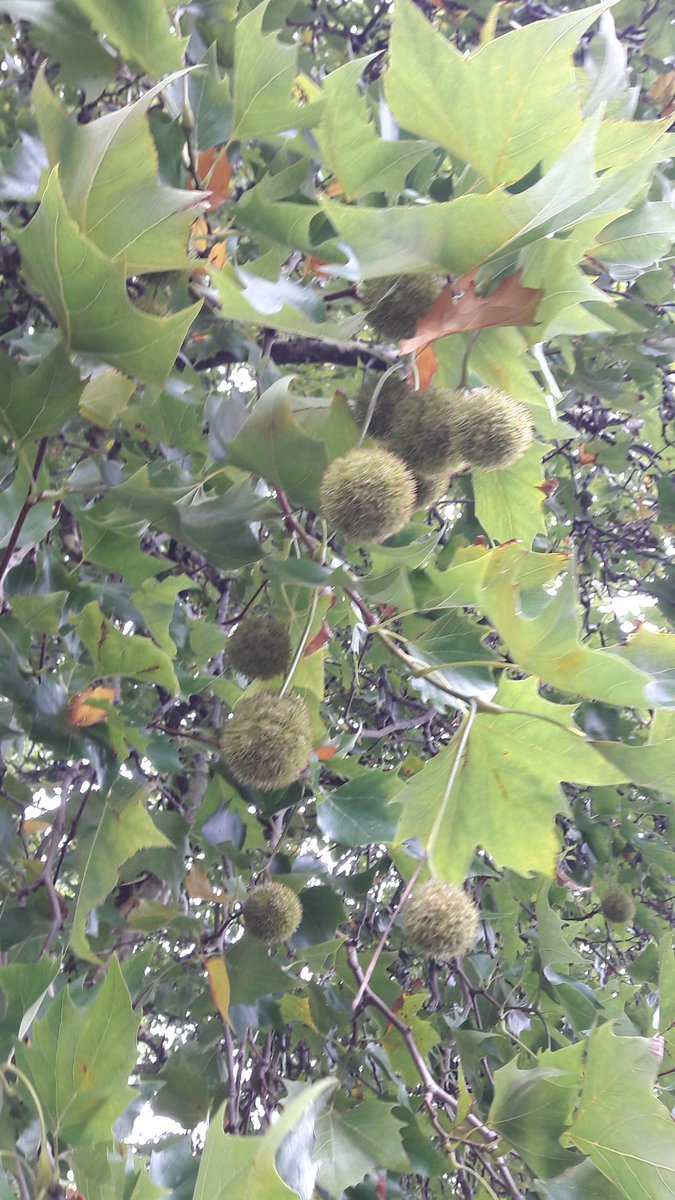 test Twitter Media - You can tell when Autumn is on its way, conkers, rain and leaves are turning https://t.co/k5qt9fkkbr
