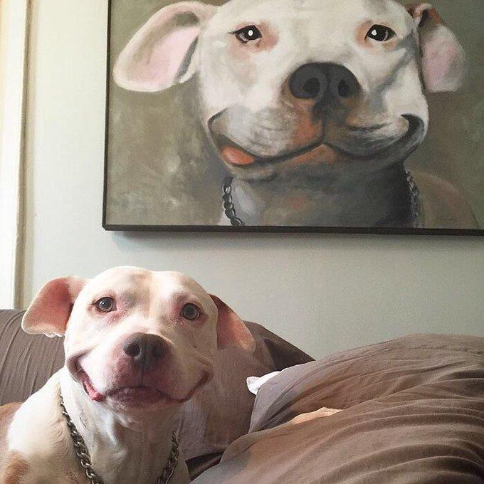 RT @pitbulIpics: Smiling pitbulls 😍 https://t.co/LyufdboyQB