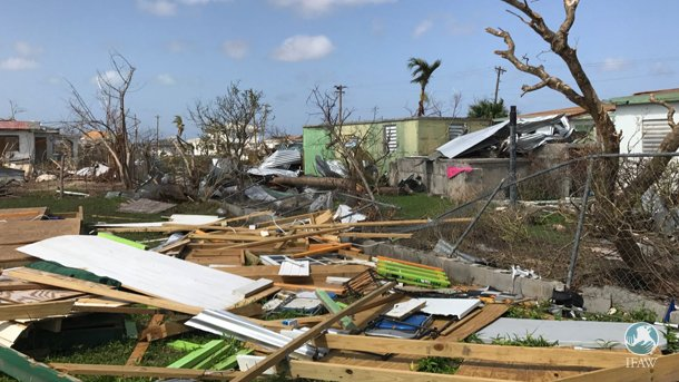 RT @action4ifaw: UPDATE: IFAW's first report from the ground on Barbuda. https://t.co/8opvPvSZVR https://t.co/vgfC9T9uqS