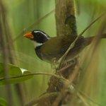 Scientists Find 21 New Bird Species by Asking the Birds