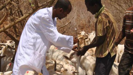 Turkana County in Sh4 million livestock vaccination drive
