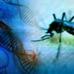 UC San Diego School of Medicine: Zika virus might help fight form of brain cancer