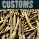 Tales of murder and suffering in Hong Kong ivory ban debate