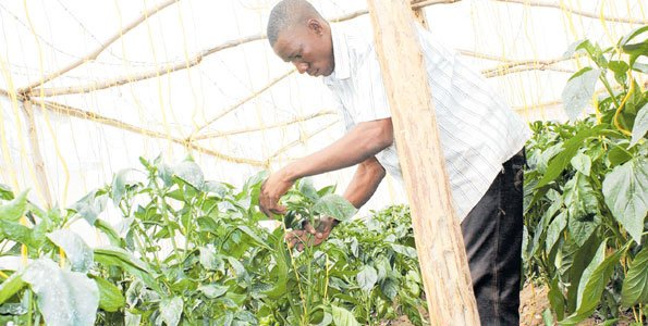 TZ starts climate-smart agriculture