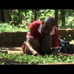Agricultural Financing: DFCU to Avail Cheap Credit to Farmers
