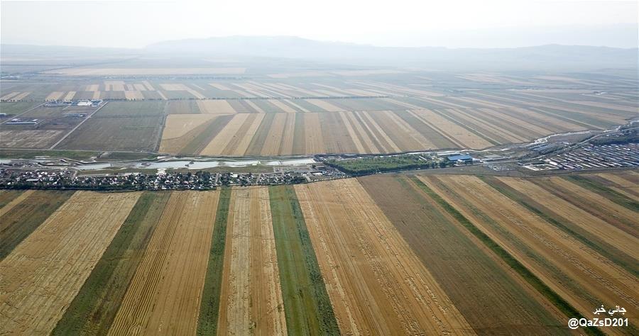 الحصاد #شينجيانغ والمناظر الجذابة والرائعة