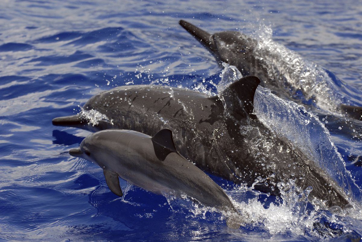 Hawaii tour operator given first fine for harassing dolphins