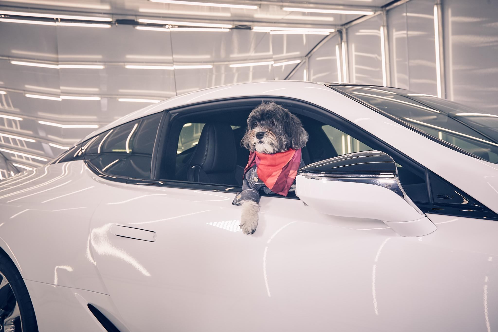 Every dog has its day. #NYFW #LexusLC #HowFashionTravels https://t.co/YdV4osTAmF