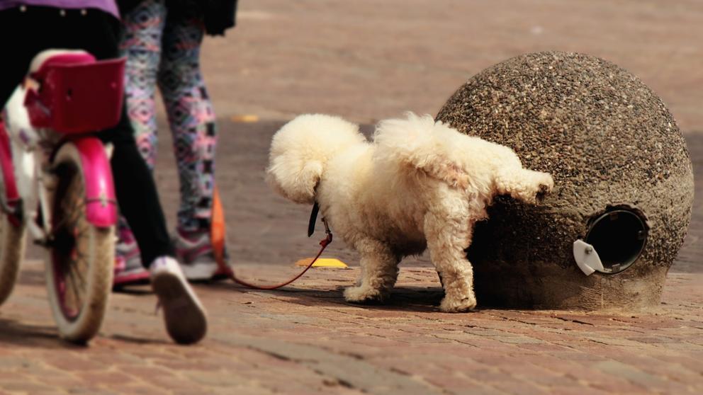 test Twitter Media - La policía advierte que el azufre no evita que los perros orinen en las calles y que es tóxico. https://t.co/oKbA7IqU51 Vía: @LaVanguardia https://t.co/JUfGcEj3oi