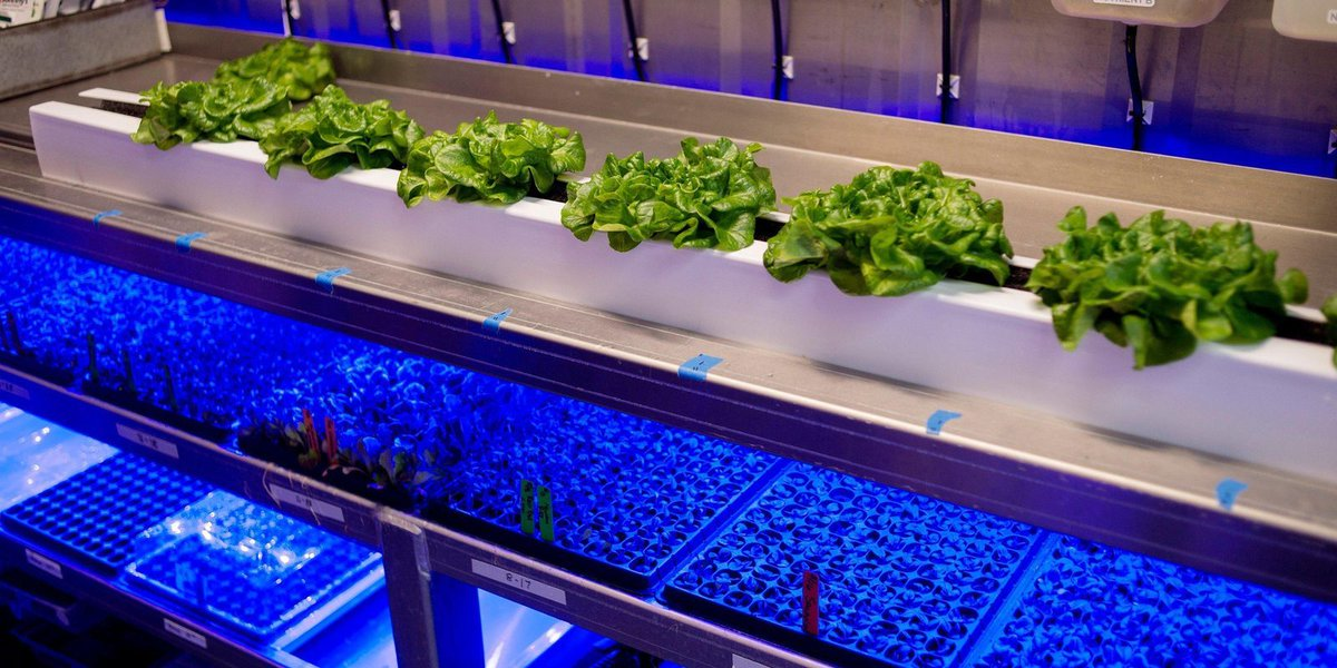 Grand Rapids farmer grows crops in shipping containers