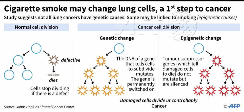 Smoking changes lung cells, primes them to develop cancer