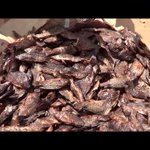 UPDF Operation on Fishing: Businessmen Netted with Immature Fish