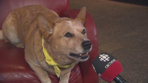 Opponents in for a ruff ride: Finn the dog runs for mayor of St. John's   https://t.co/mEaS7mXIPx  #nlpoli #cbcnl https://t.co/aGYoR62Upm
