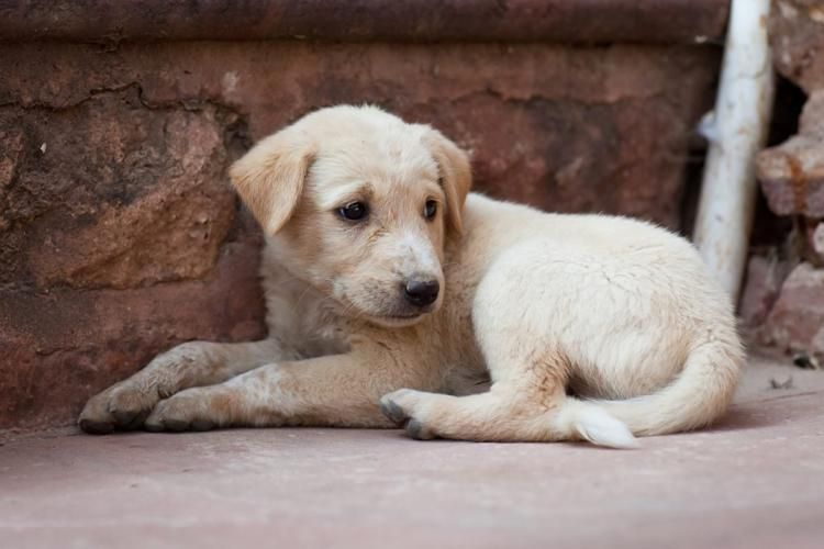 Petland puppies linked to outbreak of bacterial infection in several states https://t.co/aQVSmZmmDu https://t.co/pvL3oTs2ih