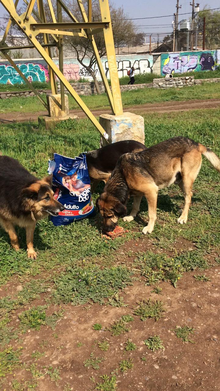 Perritos abandonados en el río Mapocho comiendo día Martes https://t.co/3zxWnVkvCP