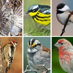 Scores of bird species could disappear due to climate change, study finds