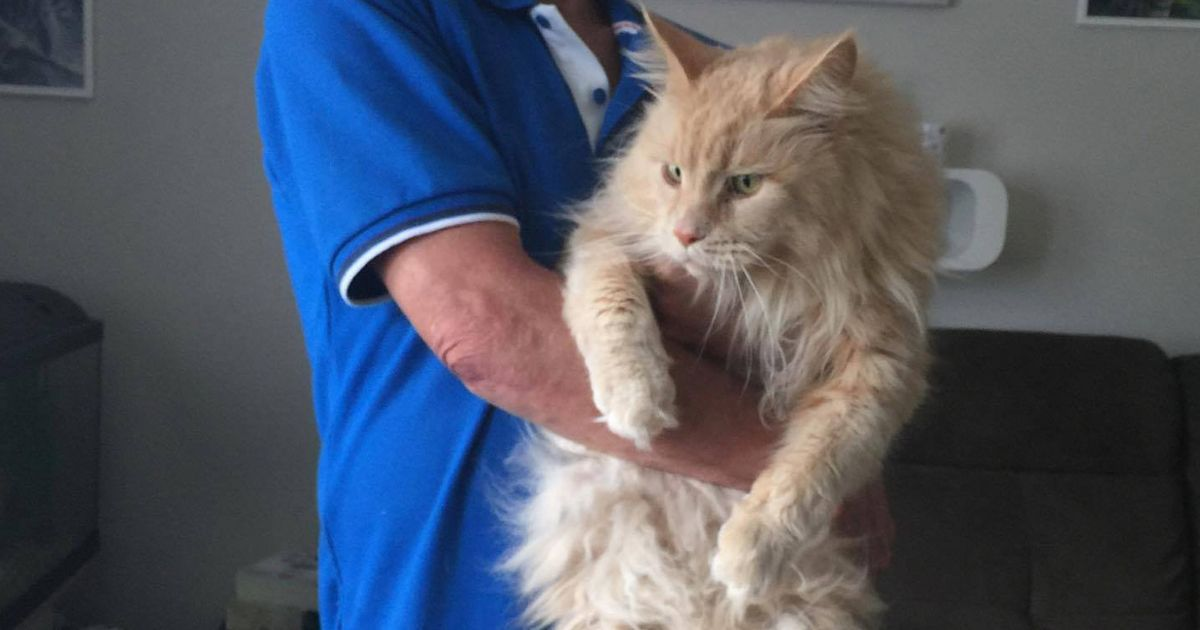 Hunt for giant pet cat so powerful it tore through a chicken wire fence to escape