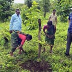 A new dimension to natural regeneration of forest