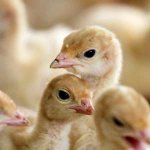 Bird flu detected in the Eastern Cape