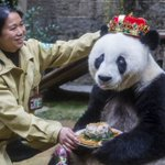 World's oldest giant panda Basi dies in China, aged 37