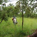 Starting from scratch in Uganda