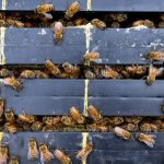 Man charged after $35k of stolen beehives found
