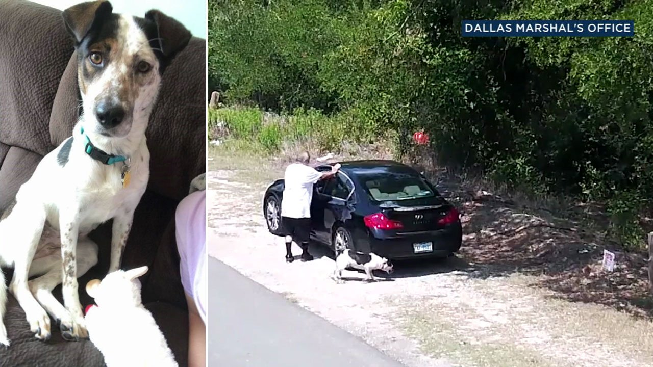 CAUGHT ON VIDEO: Man abandons dog on side of Texas road https://t.co/66ItAGKgHT https://t.co/Wd6n14N9fR