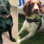 Brit cops unveil FBI-trained dogs which can 'sniff out' paedophiles