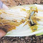 Tanzania, UN ink $2 million pacts to fight armyworms