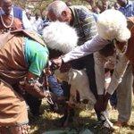 Kikuyu elders sacrifice lamb and curse Babu for 'dog' slur